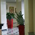 Выбор растений для кабинета