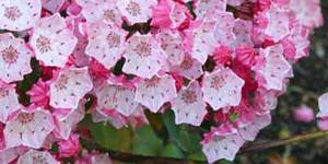 Смертельные цветы