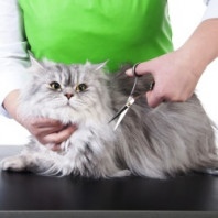 Стрижом котов самостоятельно