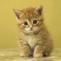 Болезни, лечение и диета для кошек